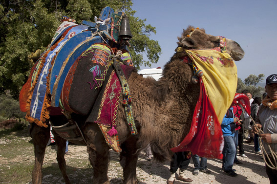 Colourful camel on walk from Kalkan to Patara